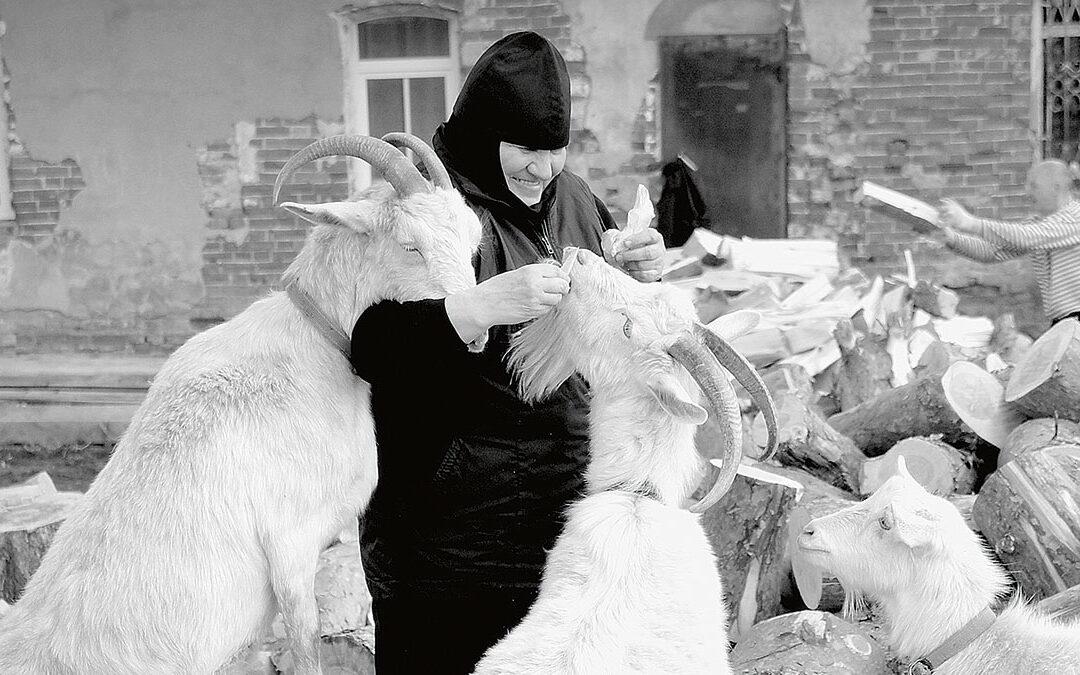 Монастырские козы в деревне Булзи