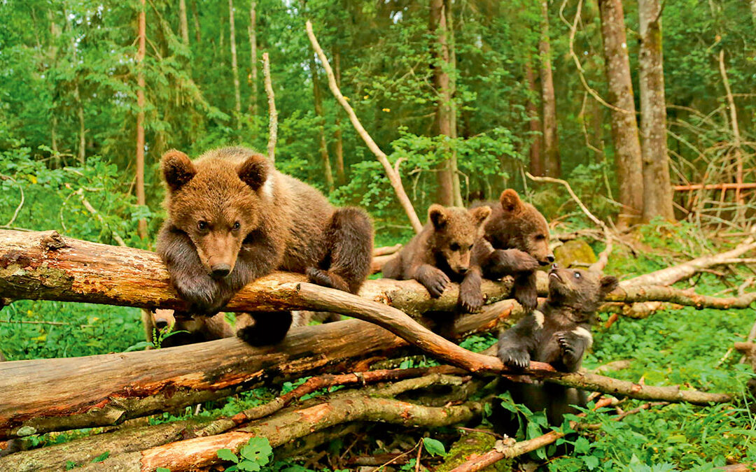 Дети медведи